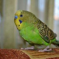 птица счастья. :: кристина Каспрук