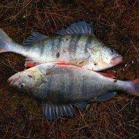 Рыбы :: Сергей