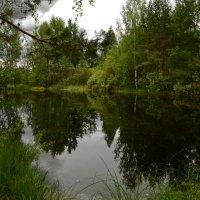 Лесное озеро :: Евгений Плаксин