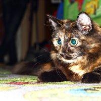 кошка  Катюшка :: Рина Татаринова
