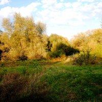 лужайка :: Дарина Нагорна