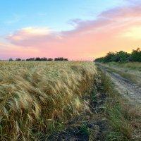 Новый урожай :: Вячеслав Яценко