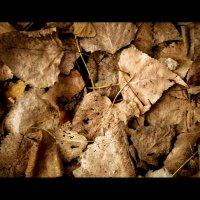 осенние листья :: Vitaliy Mytnik