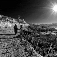 Morning shadows :: Roman Mordashev