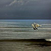Чайки :: Liudmila LLF