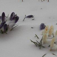 А весна была так близко... :: Андрей