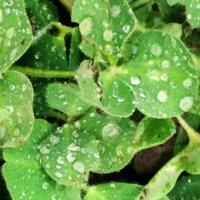 Во время дождя :: Анара