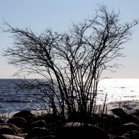 Природа на отдыхе :: Ирина Фирсова