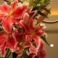 Прекрасные лилии :: ZNatasha -
