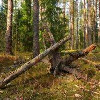 Лесные зарисовки :: Алексей Румянцев