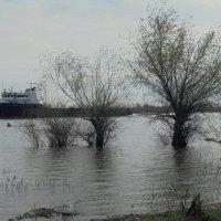 Большая вода :: Владимир Мазаев Астрахань