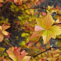 Весенние осенние краски :: Федор Кобец