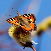 и снова бабочки 69 :: Александр Прокудин