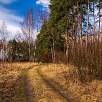 Весна идет-весне дорогу! # 2.1 :: Андрей Дворников