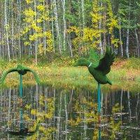Осень на пруду :: Оксана Галлямова