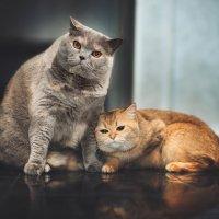 У вас дома нет кота, кого ж вы любите тогда..?) :: Лилия .