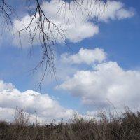 Апрельское небо и облака. :: сергей