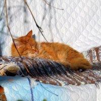 Солнечный кот :: Вадим