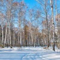 В зимнем лесу. :: Александр Леонов