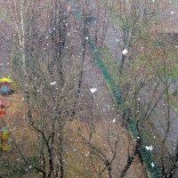 Снегопад в Москве. :: Ольга Довженко
