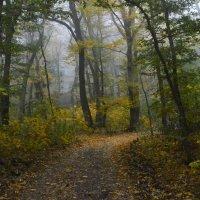В осеннем лесу.............. :: Юрий Цыплятников