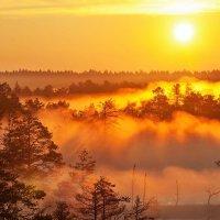 Раннее утро на болоте :: Aida10