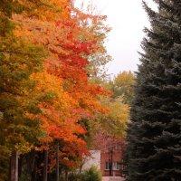 Осень в парке :: Irene Irene