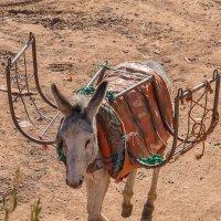 Марокканское такси :: Дмитрий Сорокин