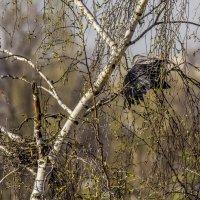 старое гнездо :: Петр Беляков