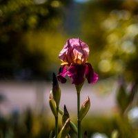 Цветочки наше всё.... :: Ирина Комолова