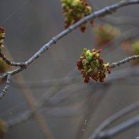 И к нам пришла Весна :: Savayr