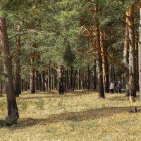 Прогулка в лесу. :: ТатьянА А...