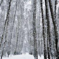 Дама с собачкой в лесу за два часа до снегопада в каком-то декабре. :: Юрий Воронов