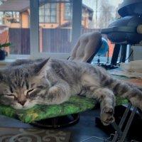 Погладьте меня , очень нуждаюсь ! :: Мила Бовкун