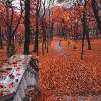 Осень :: Таня Птица