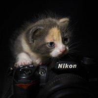 Юный фотограф :: Александр Довгий