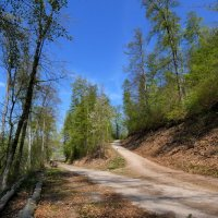 Тропинки в лесу :: Heinz Thorns