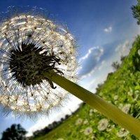В вихре солнечного вальса... :: Сергей Дружаев