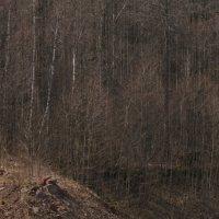 весенний лес :: Михаил Жуковский