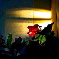 Вид закатный  стены :: Евгений БРИГ и невич