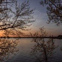 Половодье в Астраханской области :: Марина