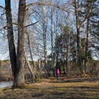 Когда деревья были большими...) :: Владимир Звягин