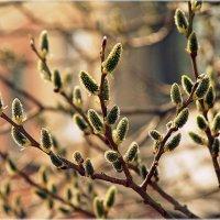 Весна пришла.. :: Александр Шимохин