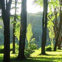 лето на Крестовском :: Елена