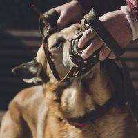 Собака :: Timetofoto