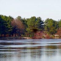 Весной на реке :: Натала ***
