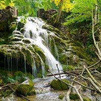 В крымском лесу :: Андрей Козлов