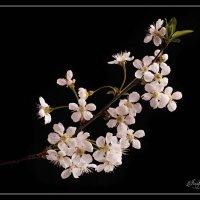 Весенние цветы :: Irene Irene