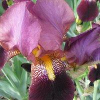 Нутро цветка :: Александр Скамо