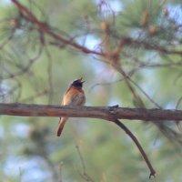 Голосистая птаха :: Владилен Панченко